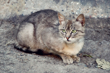 cat on the street. photo
