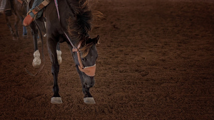 Bucking Horse At A Country Rodeo In Close-Up