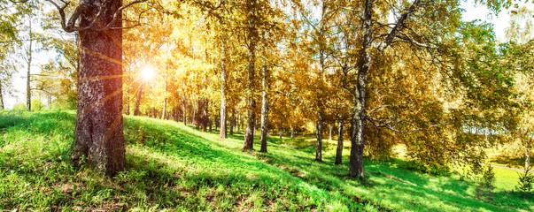 Beautiful autumn in park