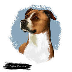 English Foxhound dog digital art illustration isolated on white background. Great Britain, England origin hunting dog. Cute pet hand drawn portrait. Graphic clip art design for web and print