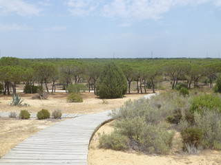 Matalascañas y Doñana,localidad costera de Almonte en Huelva,en la Comunidad Autónoma de Andalucía, en España