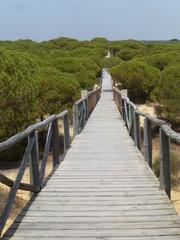 Matalascañas,localidad costera de Almonte en Huelva,en la Comunidad Autónoma de Andalucía, en España