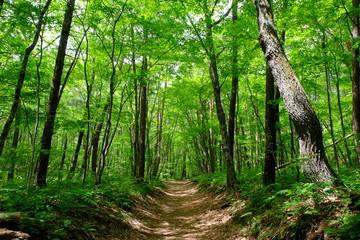 新緑のハイキングトレイル 信濃路自然歩道 軽井沢