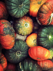 Colored Pumpkins for Halloween. Photo Image