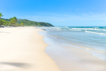 The paradise white sand beach palm trees