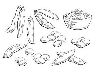 Soybean graphic black white isolated sketch set illustration vector