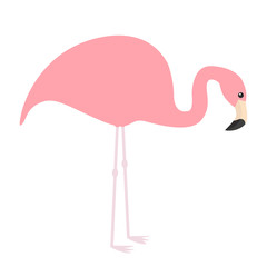 Pink flamingo icon. Exotic tropical bird. Zoo animal collection. Cute cartoon character. Looking down on the ground. Decoration element. Flat design. White background. Isolated.