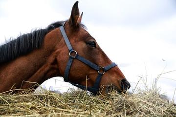 Big horse near a big haystack