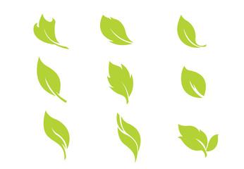 set leaf green vector illustration on background