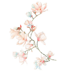 Watercolor magnolia flowers and branches