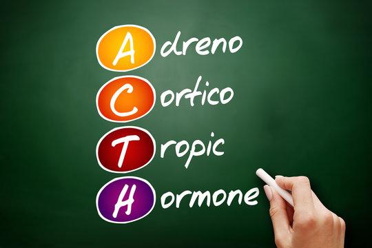 ACTH - Adrenocorticotropic hormone acronym, concept on blackboard
