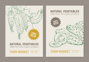 Set of flyer or poster templates with cucumbers sliced and grown on vine. Fresh organic vegetables hand drawn with contour lines. Vector illustration for farm market advertisement or promotion.