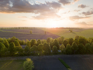 Wall Mural - Panoramic view of a large field at sunset. Photo from the drone