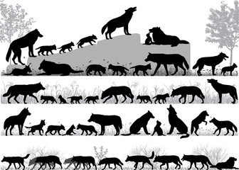 Silhouettes of wolves and its cubs outdoors