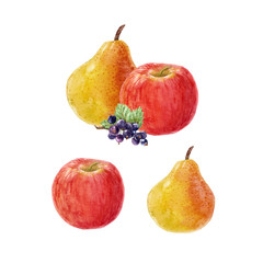Watercolor fruit vector composition