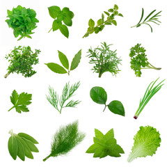 set of herbs isolated on white background