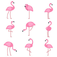 Cartoon pictures of exotic pink bird flamingo. Vector illustrations isolate