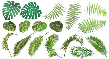 Frond leaves. Set of fern, palm, monstera and tropical vine leaves for floral design, realistic vector illustrations.