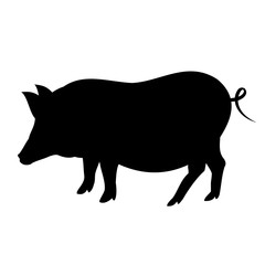 Pig silhouette. Realistic hand drawn vector illustration isolated on white background.