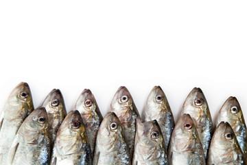 Fish on white background. herring