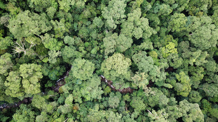 Rainforest. Aerial photo forest canopy in Borneo, Malaysia