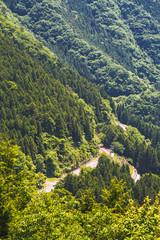 新緑の奥多摩の山