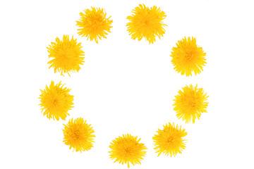 Summer Time. Blooming yellow dandelion flowers