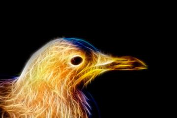 common seagull bird, animal painting