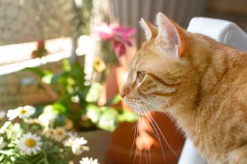 Eine rote Katze liegt in einem Gartenstuhl auf einem Balkon