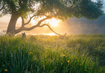 Summer nature. Misty morning. Beautiful tranquil morning landscape.