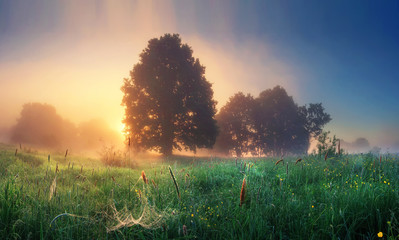 Summer nature landscape on sunrise in the morning. Scenery meadow with grass and sunlight behind trees on horizon. Misty morning. Rural perfect scene of natural countryside. Majestic vivid dawn.