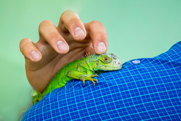 Wall Mural - Man caresses  green lizard, which sits on his hand. Love to animals_