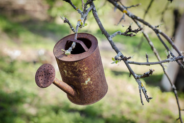 Old rusty metal watering can hanging on tree