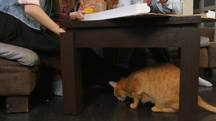 Red cat under the table, eating crumbs, while young friends eating pizza and talking