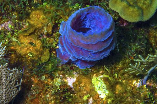 Azure Vase Sponge Stock Photo And Royalty Free Images On Fotolia