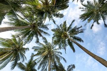 HD palm/coast Wallpaper beautiful sky , Los Angels