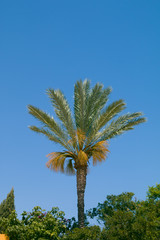 Green palm tree on blue sky backgroundgrunge palm background