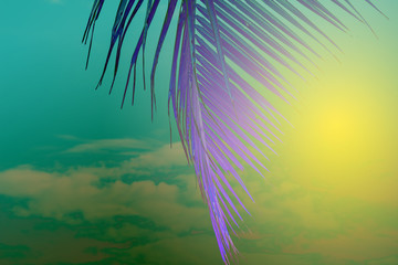 Violet palm leaf on yellow green sky background. Tropical nature abstract toned photo. Psychedelic coco palm leaf