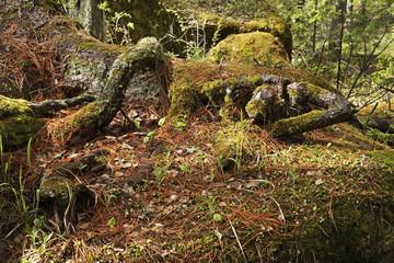 Stolby Nature Sanctuary near Krasnoyarsk. Russia