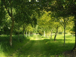 Grassy path through trees in a park in spring with dappled sunlight