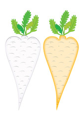 Symbolls root vegetables.The objects of the parsley and carrot isolated, vector.