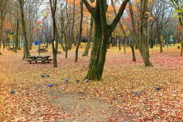 公園の秋の風景36