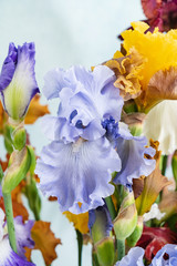 bunch of colorful irises