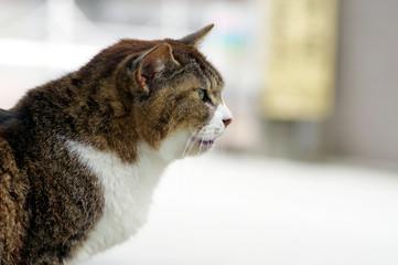 怒っている野良猫