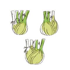 vector color contour fennel vegetable set pattern