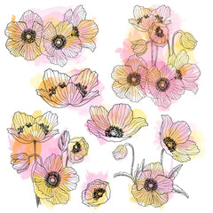 Anemone flower linear drawing bouquet set. Wild plant with watercolor spots. Herbal engraved style illustration. Detailed botanical sketch. Flower concept. Botanical concept.