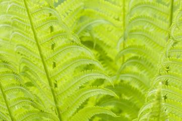 Closeup curled fern frond