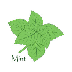 mint on the white