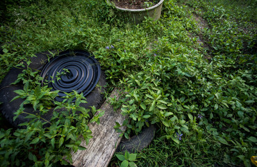 grass in the garden with plastic cap and wood
