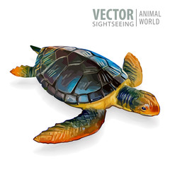 Big sea turtle. Vector illustration. Tortoise isolated on white background.